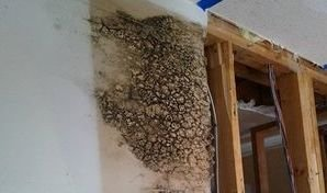 Water Damage Caused By Mold Growth