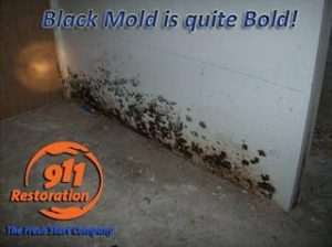 Commercial Restoration Black Mold